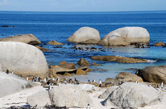 Rochas, oceano e pinguins Foto de Stock