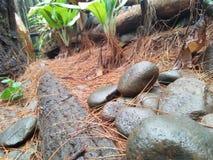 Rochas que estão na floresta e no olhar resistido naturais fotografia de stock royalty free