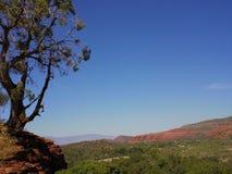 Rochas vermelhas de Sedona com Jasper Tree Fotografia de Stock Royalty Free