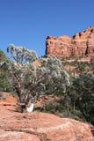 Rochas vermelhas de Sedona o Arizona Fotos de Stock