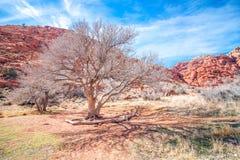 Rochas vermelhas no sudoeste fotografia de stock