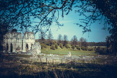 Roche Abbey Ruins Maltby UK. Roche Abbey Maltby Yorkshire UK Stock Photography