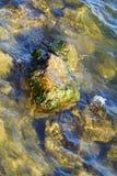 Roche avec des algues Photographie stock