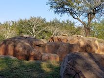 Roche avec les lions de repos photo libre de droits
