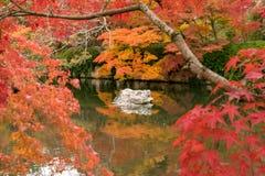 Roche blanche dans un étang de zen entourant par l'arbre rouge d'automne, Kyoto images stock