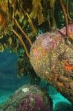 Roche colorée sous-marine Image libre de droits