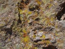 roche couverte de lichens Images libres de droits