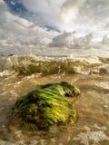 Roche couverte par algues lavée par des vagues de mer Image libre de droits