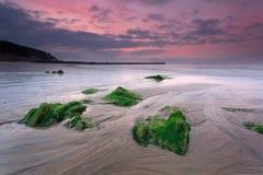Roche d'algue et l'aube Photographie stock libre de droits