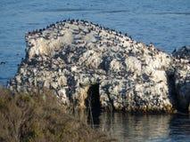 Roche d'oiseaux Image stock