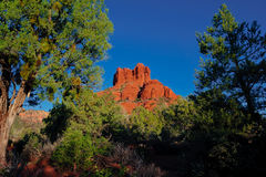 Roche de Bell vue de la forêt de Sedona Arizona Photo stock
