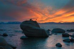 Roche de bonsaïs dans le lac Tahoe photo libre de droits