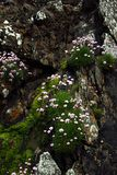 Roche de fleur Photos stock