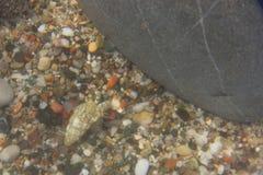 Roche de plage de mer d'ermite de crabe Image stock