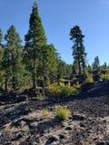 Roche durcie de lave dans la forêt Images stock
