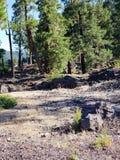 Roche durcie de lave dans la forêt Image libre de droits