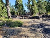 Roche durcie de lave dans la forêt Images libres de droits