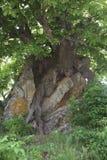 Roche et arbre Photographie stock libre de droits
