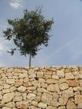 Roche et arbre photographie stock
