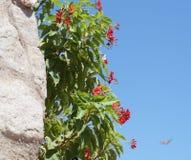Roche et arbre en pierre Photos libres de droits