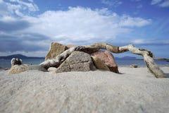 Roche et arbre sur l'île de Tavolara en Italie photo stock