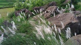Roche et herbe Photo libre de droits