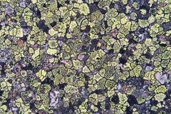 Roche européenne d'alpes avec le lichen Fond naturel photos libres de droits