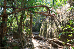Roche géante dans la forêt Image stock