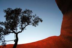 Roche lointaine d'Ayers d'arbre (Uluru) Photo stock
