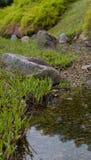 Roche par l'étang Photographie stock