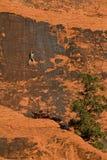 roche rouge s'élevante Photographie stock libre de droits