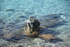 Roche sauvage de mer Images libres de droits