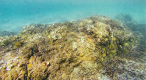 Roche sur le fond marin Photos libres de droits