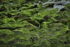 Roche verte sur le littoral Image libre de droits