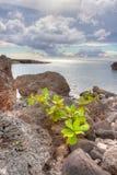 Roche volcanique d'ava par l'océan Hawaï images libres de droits