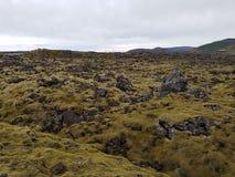 Roche volcanique et mousse de l'Islande photos libres de droits