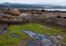 Rochers étranges de roche au point de tapis à longs poils dans le Catlins en île du sud au Nouvelle-Zélande photos stock