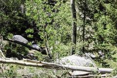Rochers, arbres, et rondins Photo stock