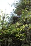 Rochers dans la forêt Photographie stock libre de droits