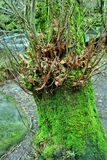 Rochers de Hardcastle, Yorskhire occidental Images stock