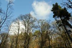Rochers de Hardcastle, Yorskhire occidental Photographie stock libre de droits
