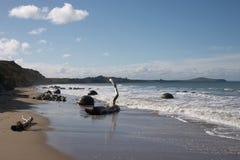 Rochers de Moeraki photo libre de droits