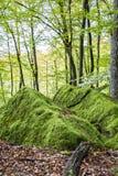 Rochers moussus au plateau de Ferschweiler, Allemagne images stock