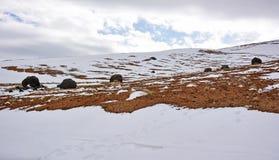 Rochers ronds de vulcano sur la pente neigeuse de montagne images stock