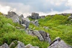 Rochers sur le pré de montagne avec des pissenlits Photographie stock