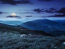 Rochers sur le pré de montagne la nuit Photographie stock