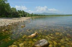 Roches au fond par l'eau du lac Baïkal photos stock