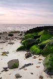 Roches avec de la mousse sur la plage Photo stock