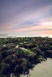 Roches avec de la mousse verte sur la plage Photo stock