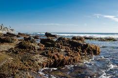 Roches avec des créatures de mer à la plage Images libres de droits